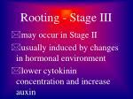rooting stage iii