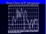 fever curve of p falciparum