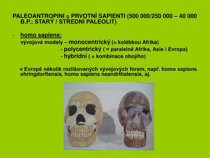 PALEOANTROPINI = PRVOTNÍ SAPIENTI (500 000/250 000 – 40 000 B.P.; STARÝ / STŘEDNÍ PALEOLIT)