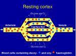 resting cortex1