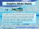dolphin mahi mahi