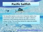 pacific sailfish