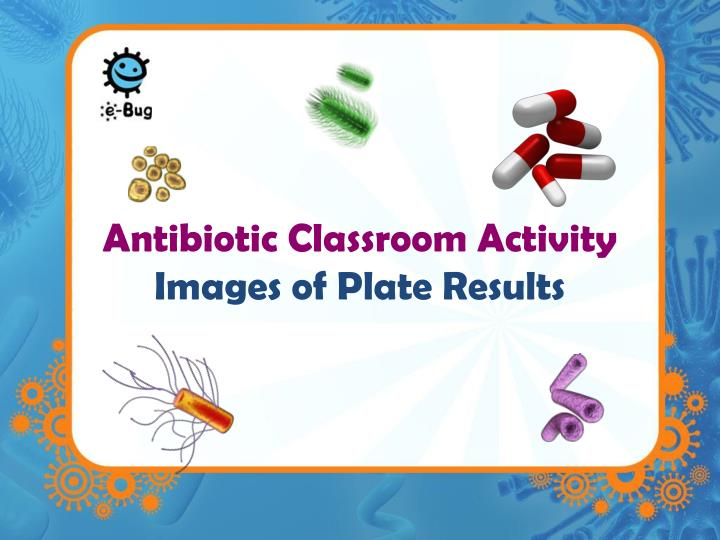 antibiotic classroom activity images of plate results n.