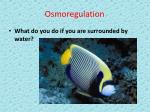 osmoregulation27