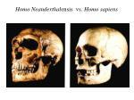 homo neanderthal ensis vs homo sapiens
