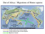 out of africa migrations of homo sapiens