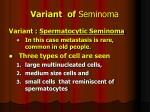 variant of seminoma