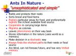 ants in nature unsophisticated and simple