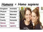 humans homo sapiens