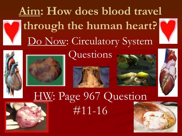 aim how does blood travel through the human heart n.