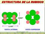 estructura de la rubisco