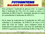 fotosintesis balance de carbonos