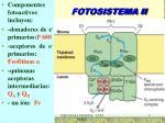 fotosistema ii