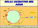 reloj oxidativo del agua