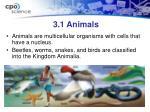 3 1 animals