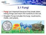 3 1 fungi