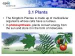 3 1 plants