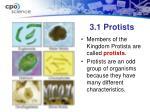 3 1 protists