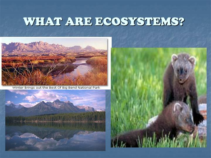 what are ecosystems n.