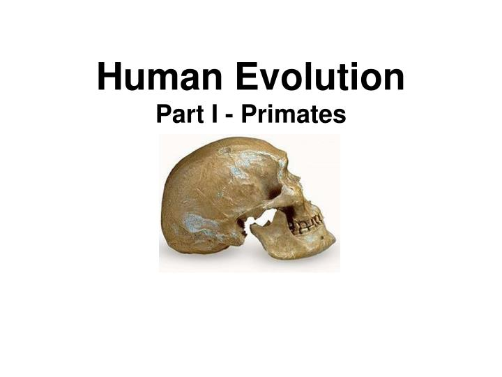 human evolution part i primates n.