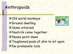 anthropoids3