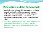 metabolism and the carbon cycle