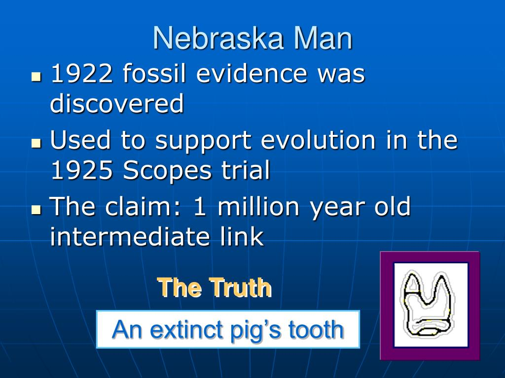 PPT - Did Humans Evolve? PowerPoint Presentation - ID:5614430