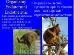 organismy endotermn endothermic