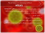 htlv12