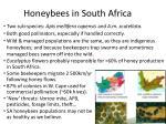 honeybees in south africa