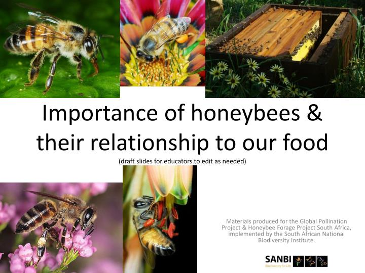 importance of honeybees their relationship to our food draft slides for educators to edit as needed n.