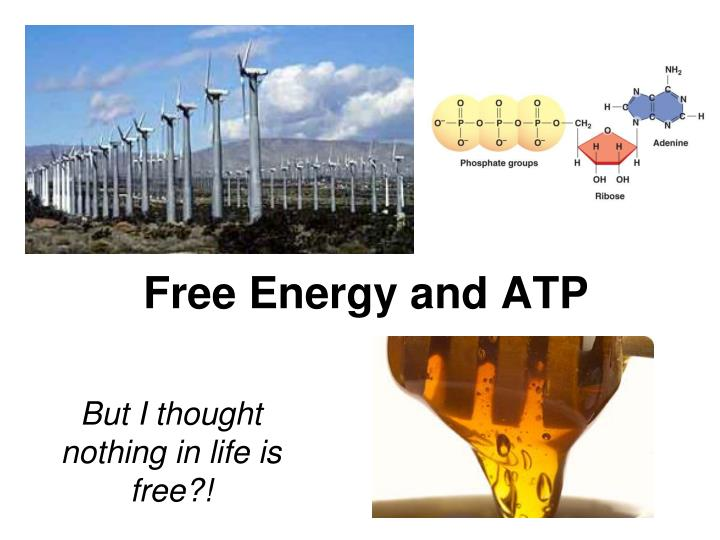free energy and atp n.