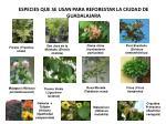 especies que se usan para reforestar la ciudad de guadalajara