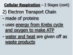 cellular respiration 2 stages cont1