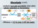 glycolysis cont2