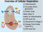 overview of cellular respiration1
