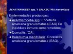 acanthamoeba spp y balamuthia mandrillaris