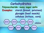 carbohydrates4