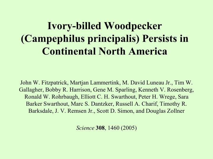 ivory billed woodpecker campephilus principalis persists in continental north america n.