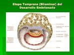 etapa temprana bilaminar del desarrollo embrionario1