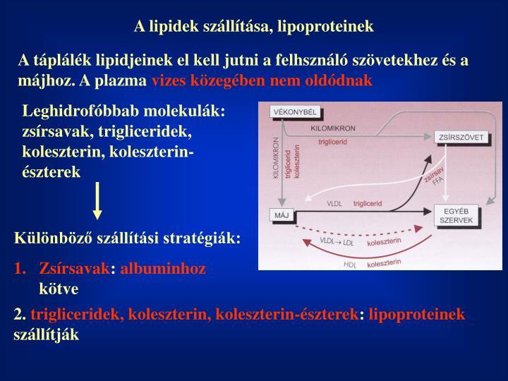 A lipidek szállítása, lipoproteinek