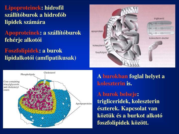 Lipoproteinek