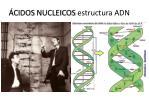 cidos nucleicos estructura adn1