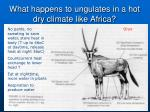 what happens to ungulates in a hot dry climate like africa