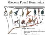 miocene fossil hominoids1