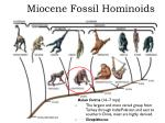 miocene fossil hominoids2