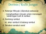 dermis kulit jangat1