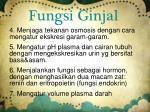 fungsi ginjal1