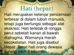 hati hepar