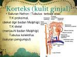 korteks kulit ginjal1